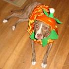 Katy In Costume For Halloween