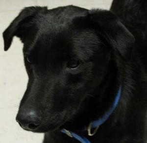Moe :  Wetnose Wednesday Dog January 13, 2010