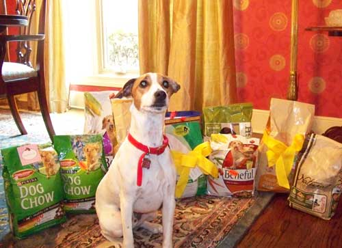 Sunny showing off with all the dog food Analise donated to Guardian Angel Pet Rescue
