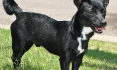 Clipper - An Adoptable Rescue Dog featured in Wet Nose Wednesday in Memphis, TN