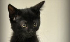 Stormy_Adoptable_Kitten