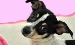 Pandora | Wet Nose Wednesday Dog