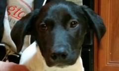 rescue_dog2