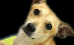 rescue_dog_Jenny
